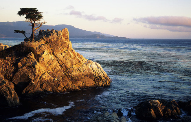 A view of the ancient Lone Cypress from the Pacific Coast Highway